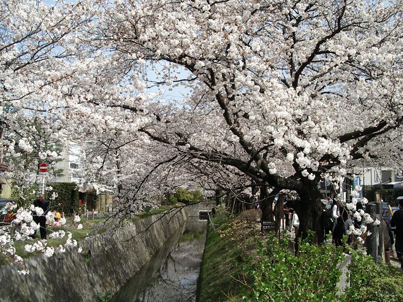 画像:Tetsugakunomichi02.jpg