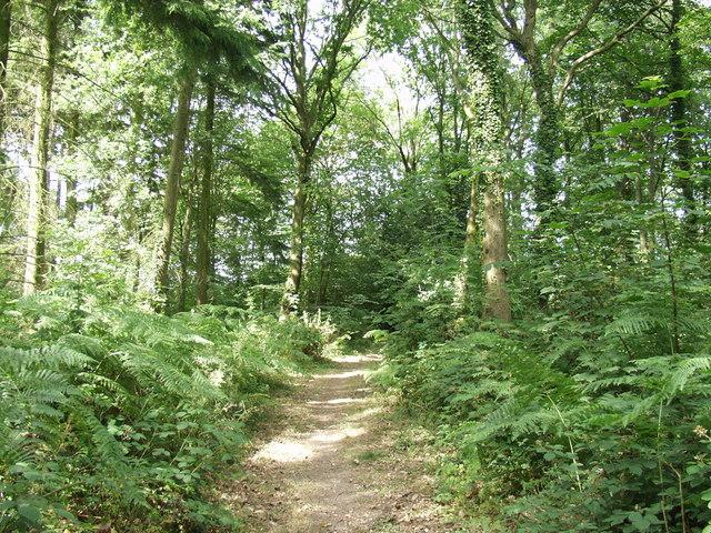 The Clywedog Trail through Plas Power Woods - geograph.org.uk - 209471