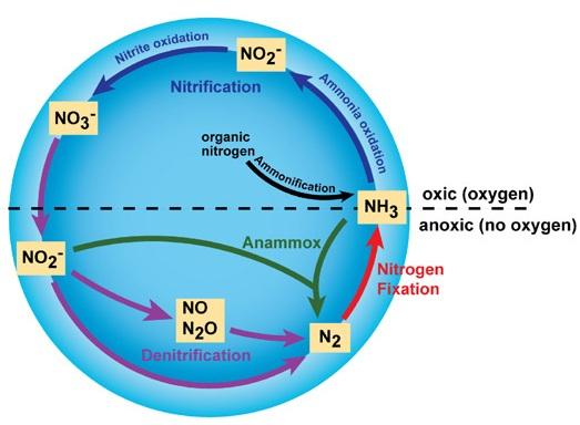The Nitrogen Cycle.jpg