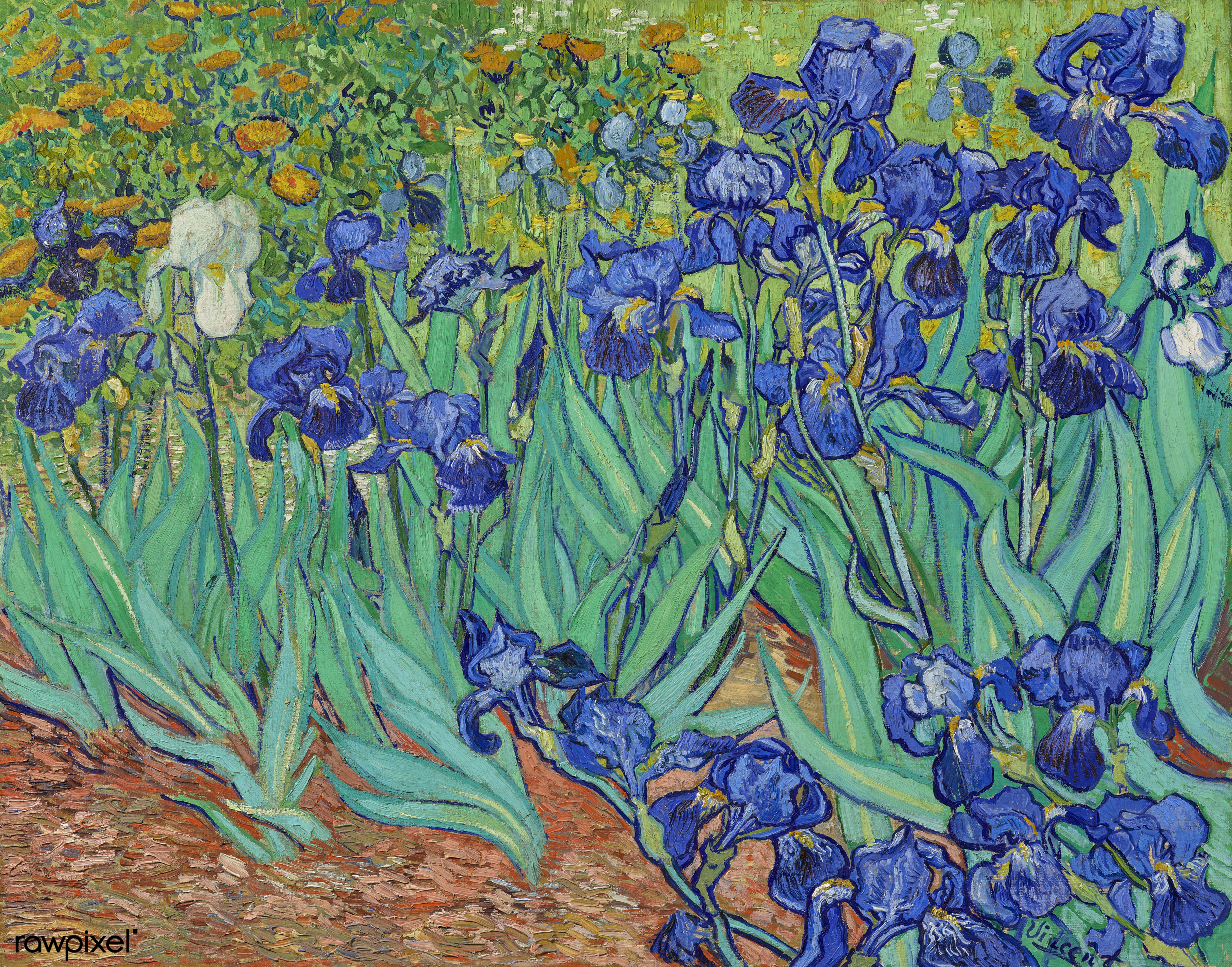 File:Vincent van Gogh's famous painting, digitally enhanced by rawpixel-com  2.jpg - Wikimedia Commons