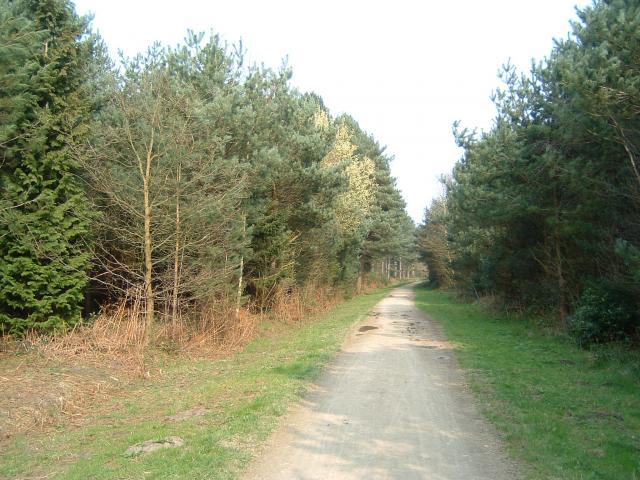 Wheldrake Wood - geograph.org.uk - 1216