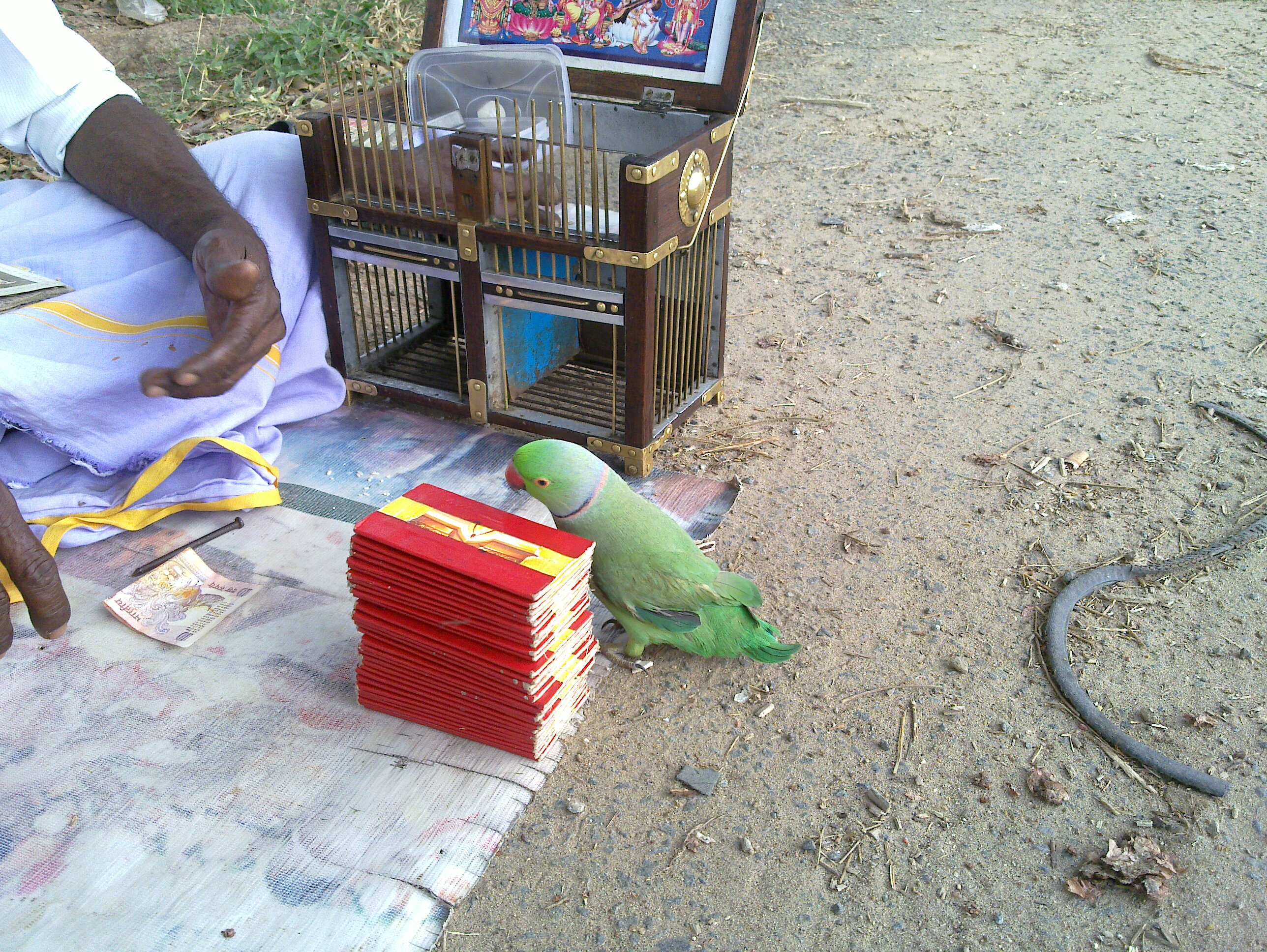 parrot astrology cards