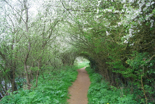 An tunnel of trees to pass through, Medway Valley Walk - geograph.org.uk - 1265809