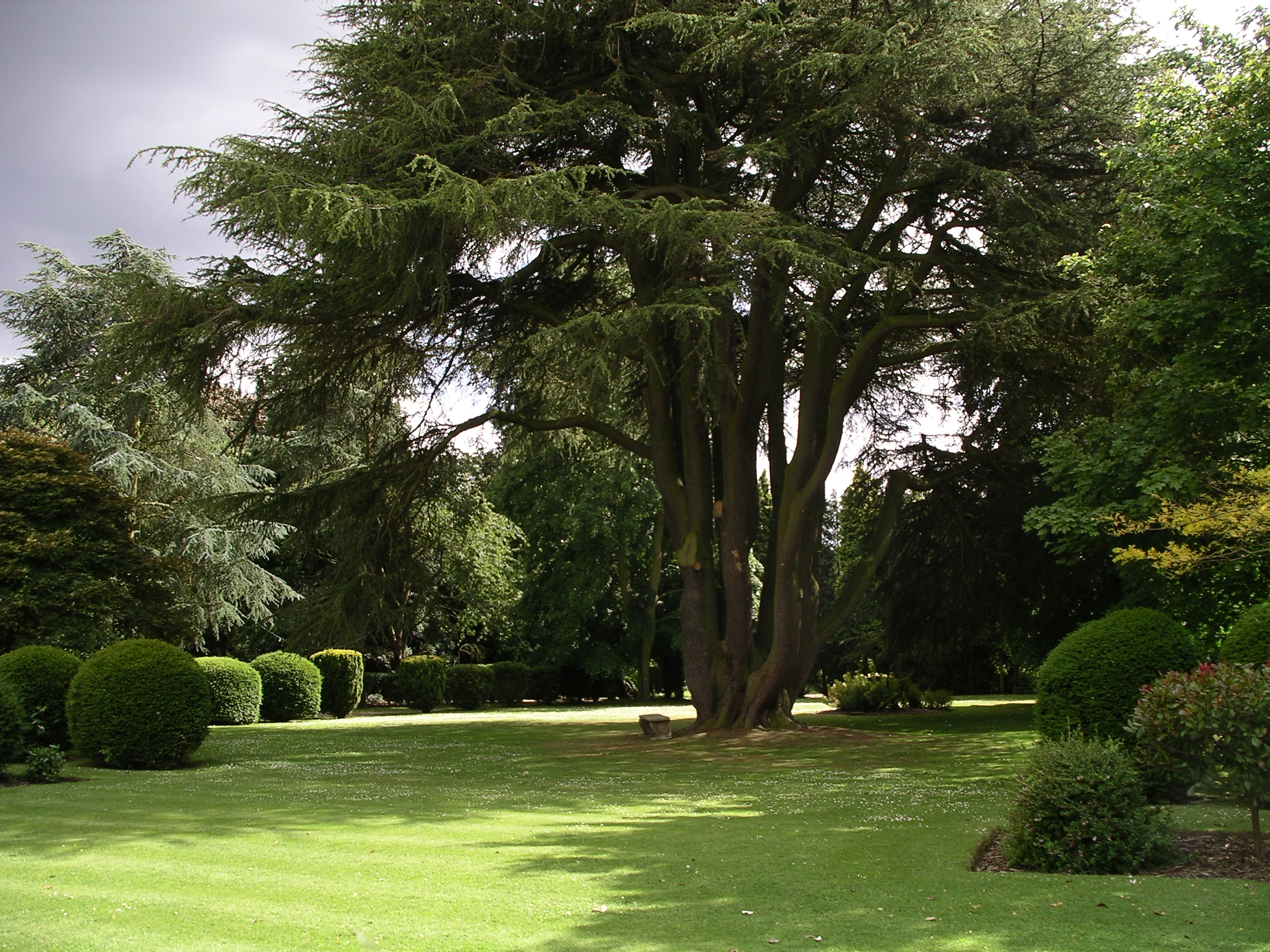 File ansty hall rear garden trees wikimedia for Garden law trees