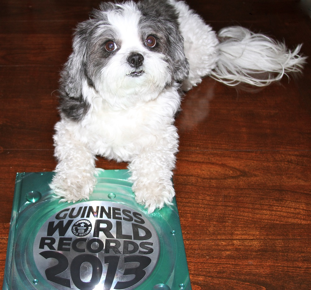 Most Expensive Dog Food In The World