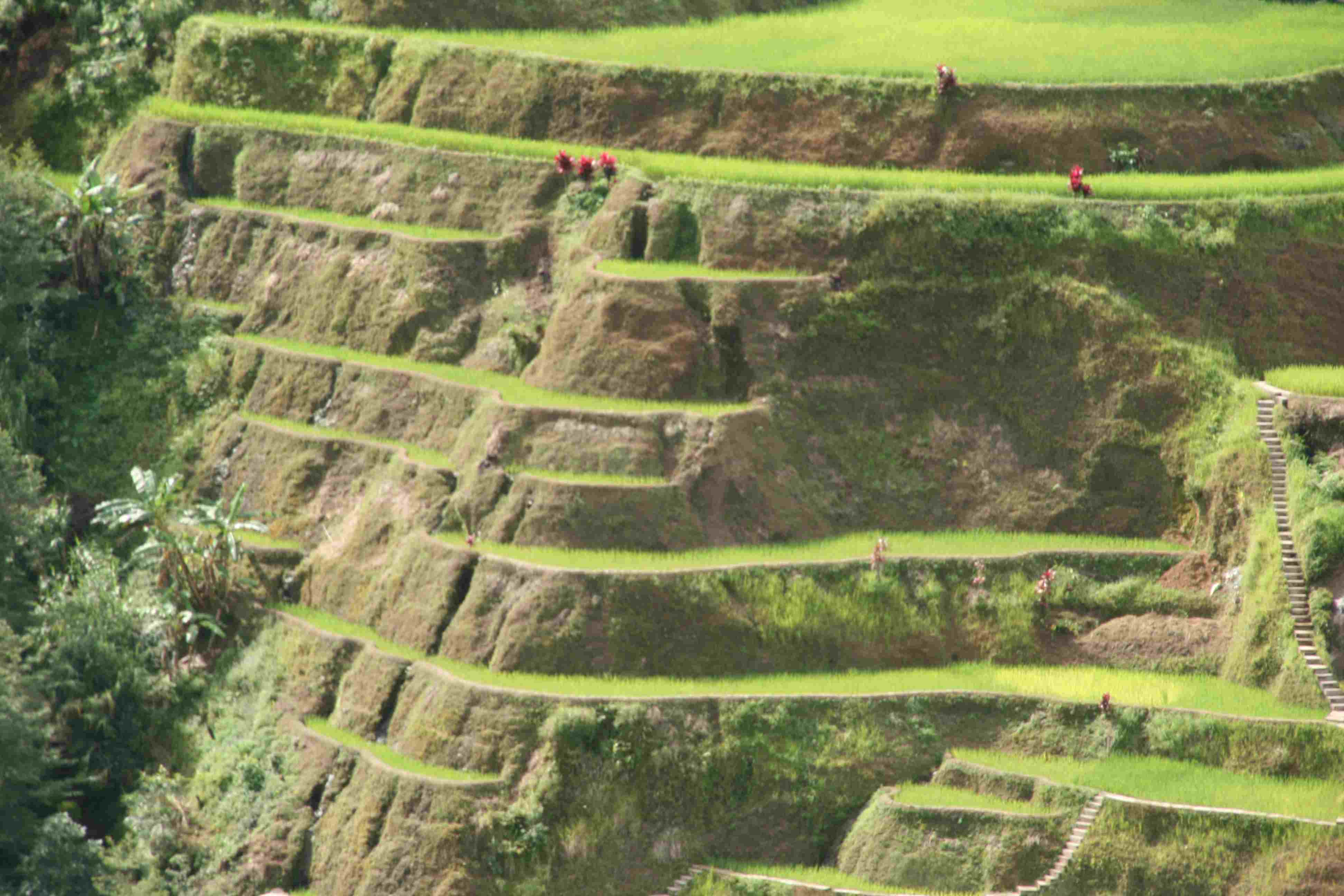 17 Tremendous Terraced Rice Fields