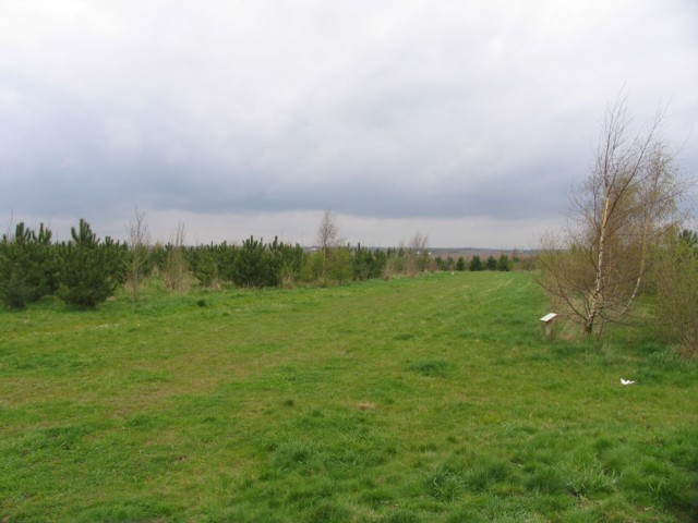 Battram Wood - geograph.org.uk - 158847