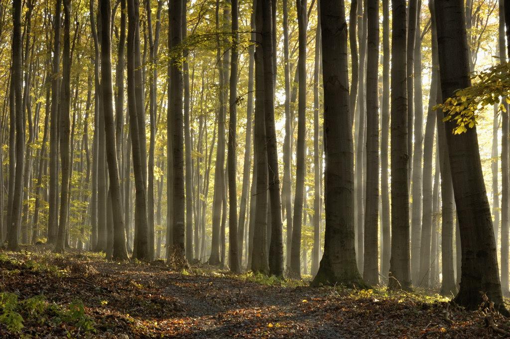 Listnatý les