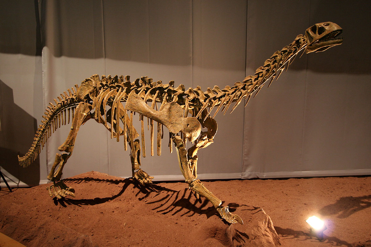 Bellusaurus - Wikipedia