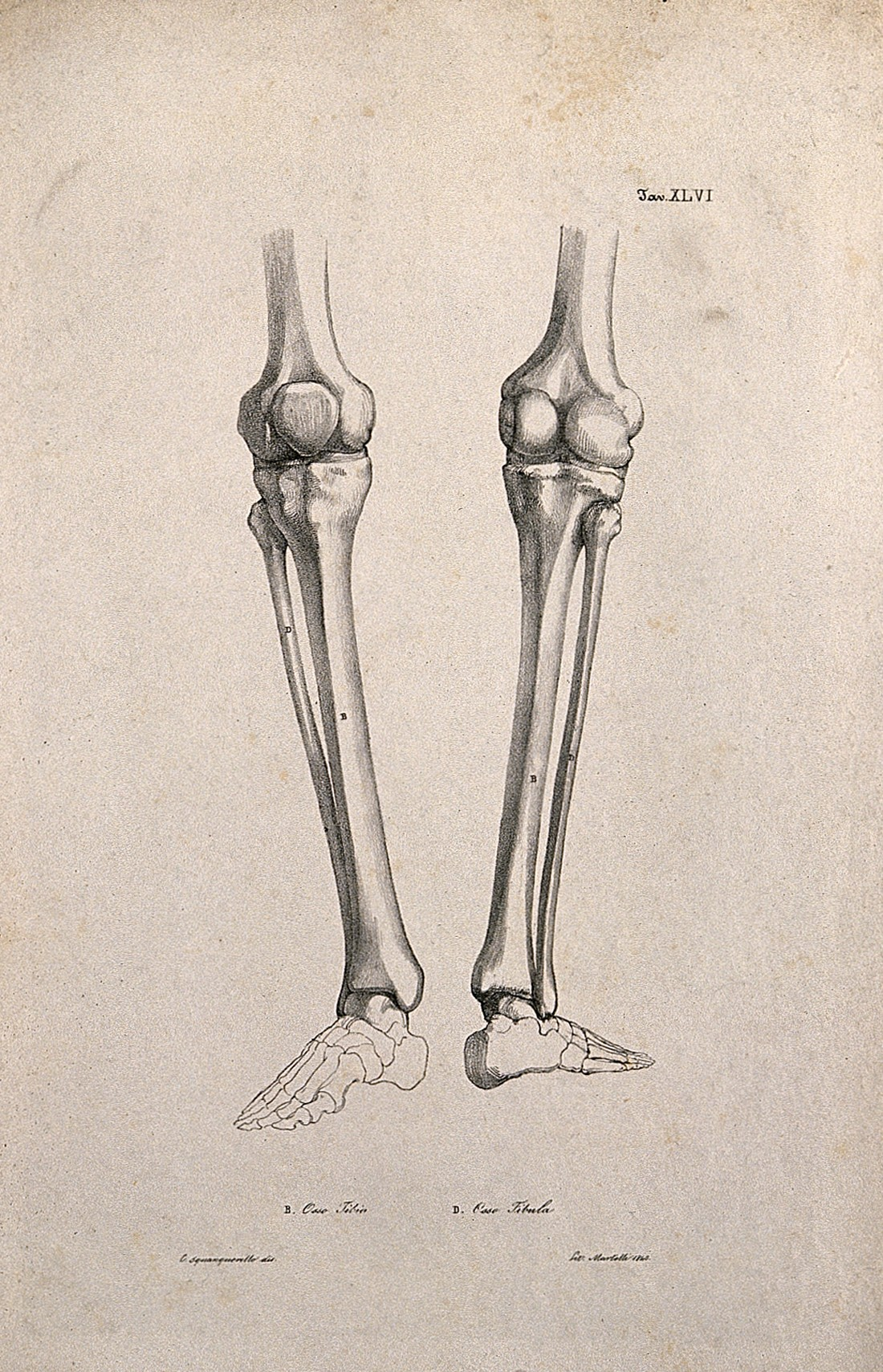 Filebones Of The Foot And Lower Leg Two Figures Lithograph By