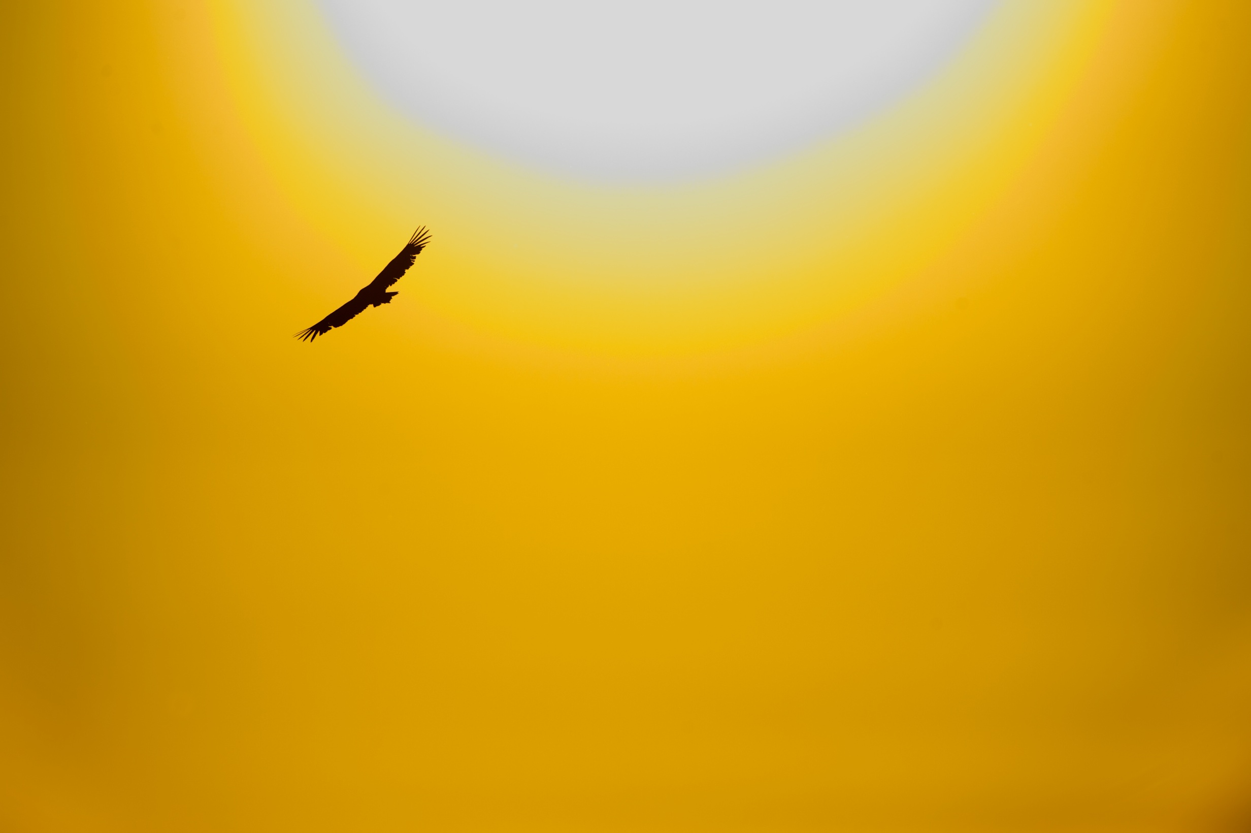 Birds flying in the sky sunset
