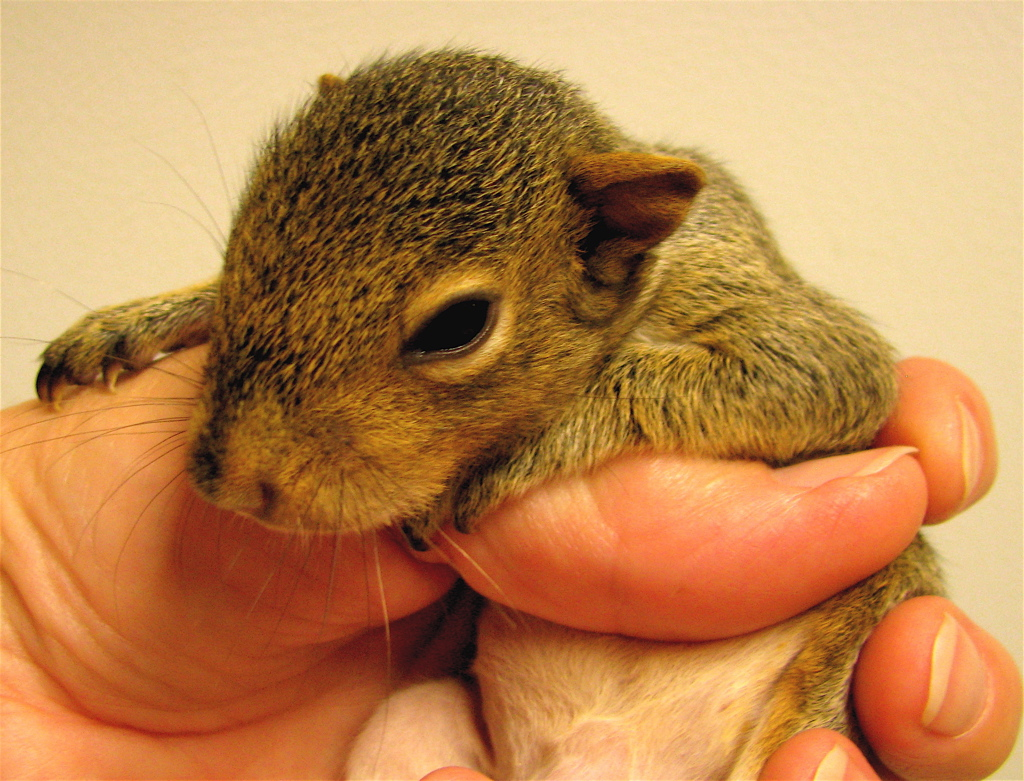Cute Squirrel Baby File:Hello World, Baby...