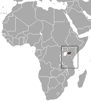 The average adult weight of a Kilimanjaro shrew is 16 grams (0.04 lbs)