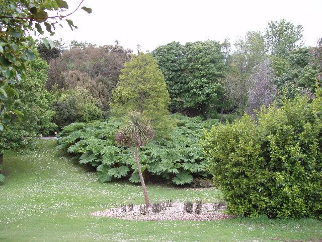 File Logan Botanic Gardens Gunnera Grove Geograph Org Uk 14830