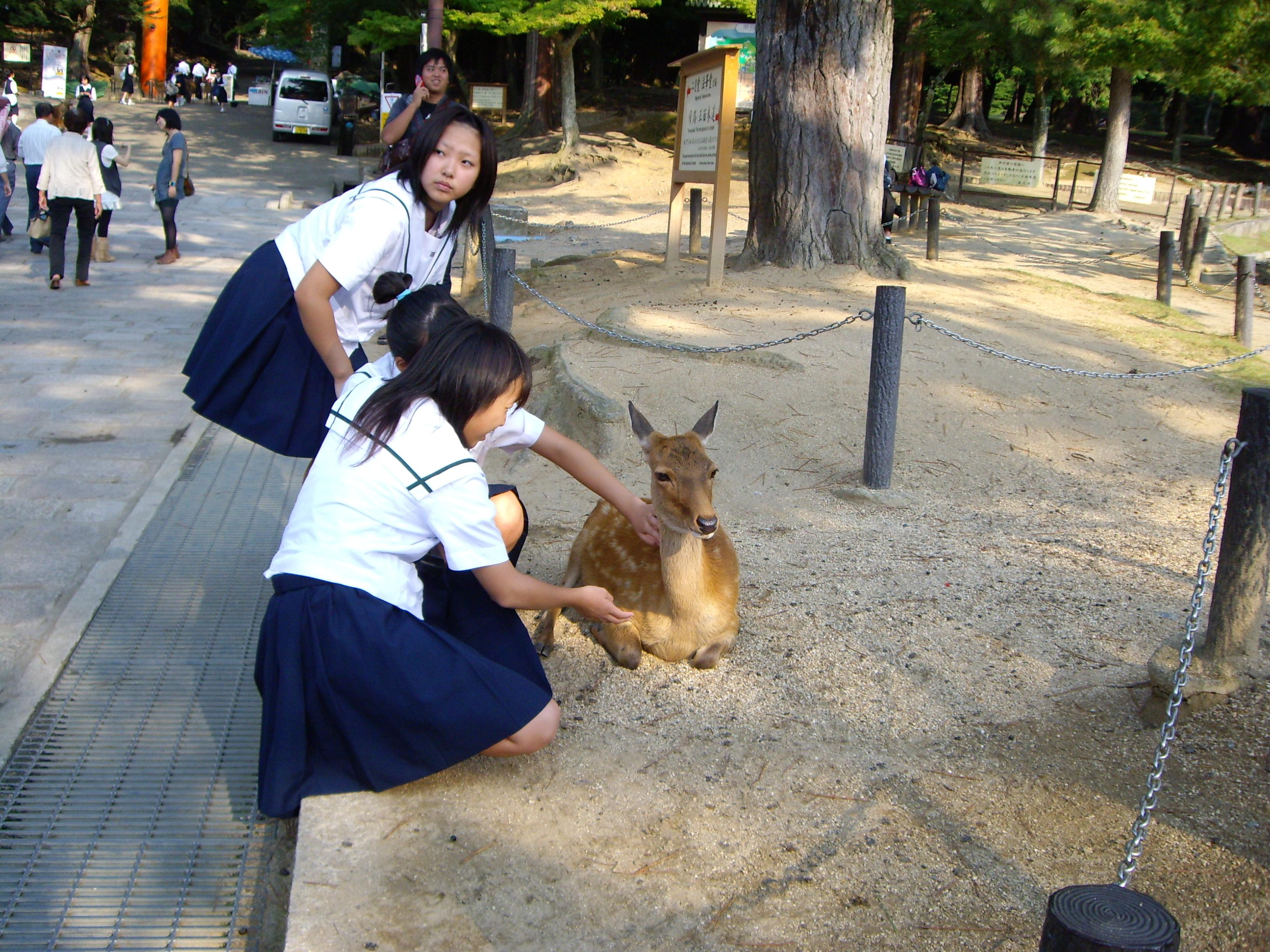 Descripción Nara ciervo colegialas.JPG