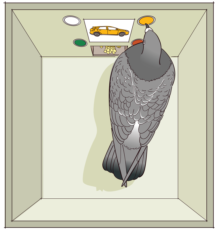 File:Operant Conditioning Involves Choice.png - Wikimedia Commons