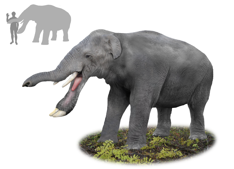 platybelodon elephant 3d model | Неделя 12- животные 3 | Pinterest ...
