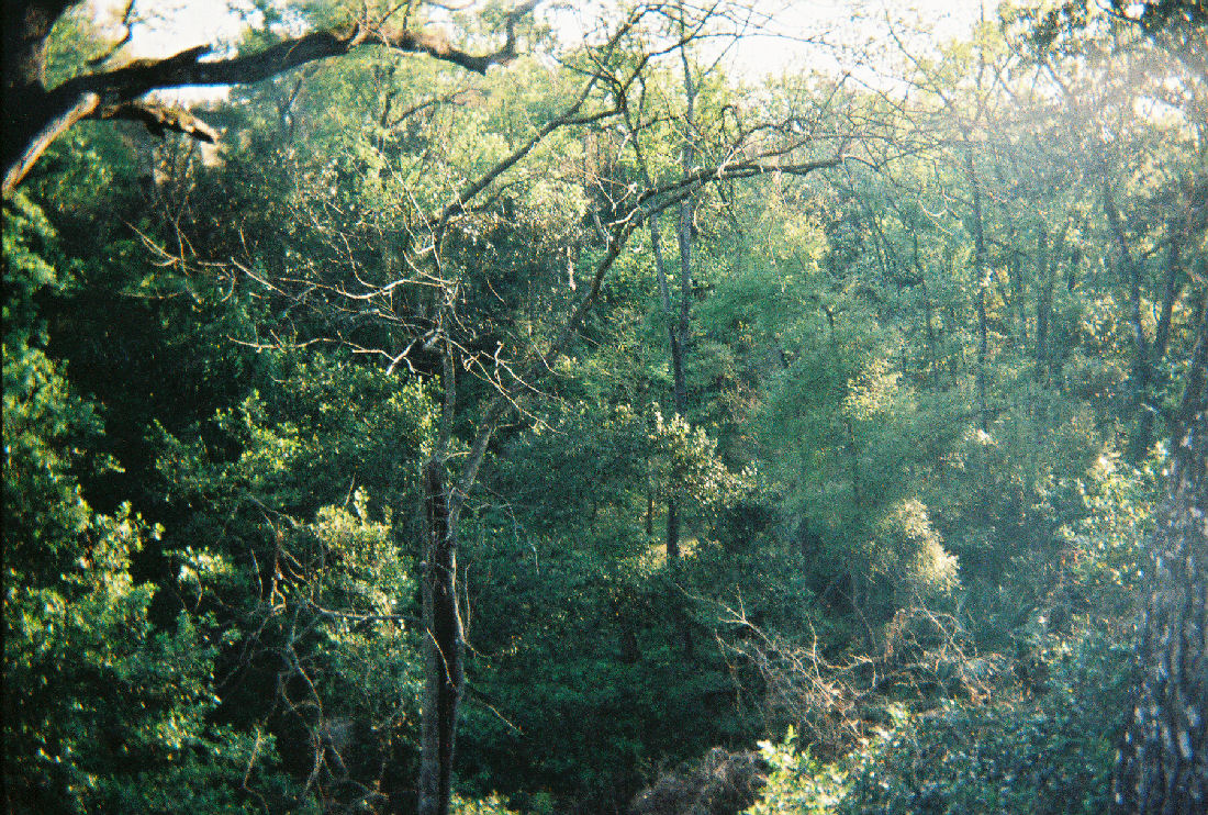 Ravine Gardens State Park Wikipedia