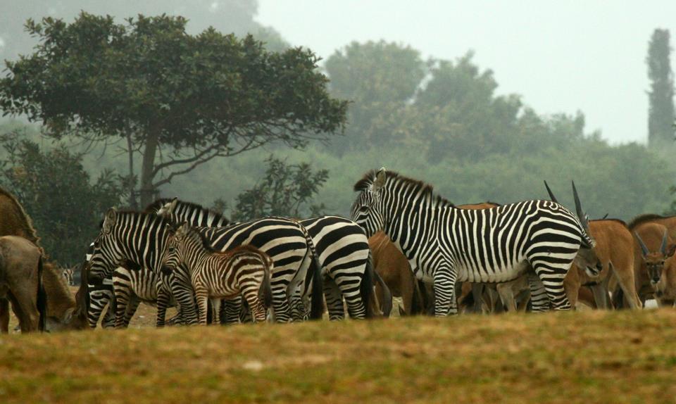 open magnet links in safari