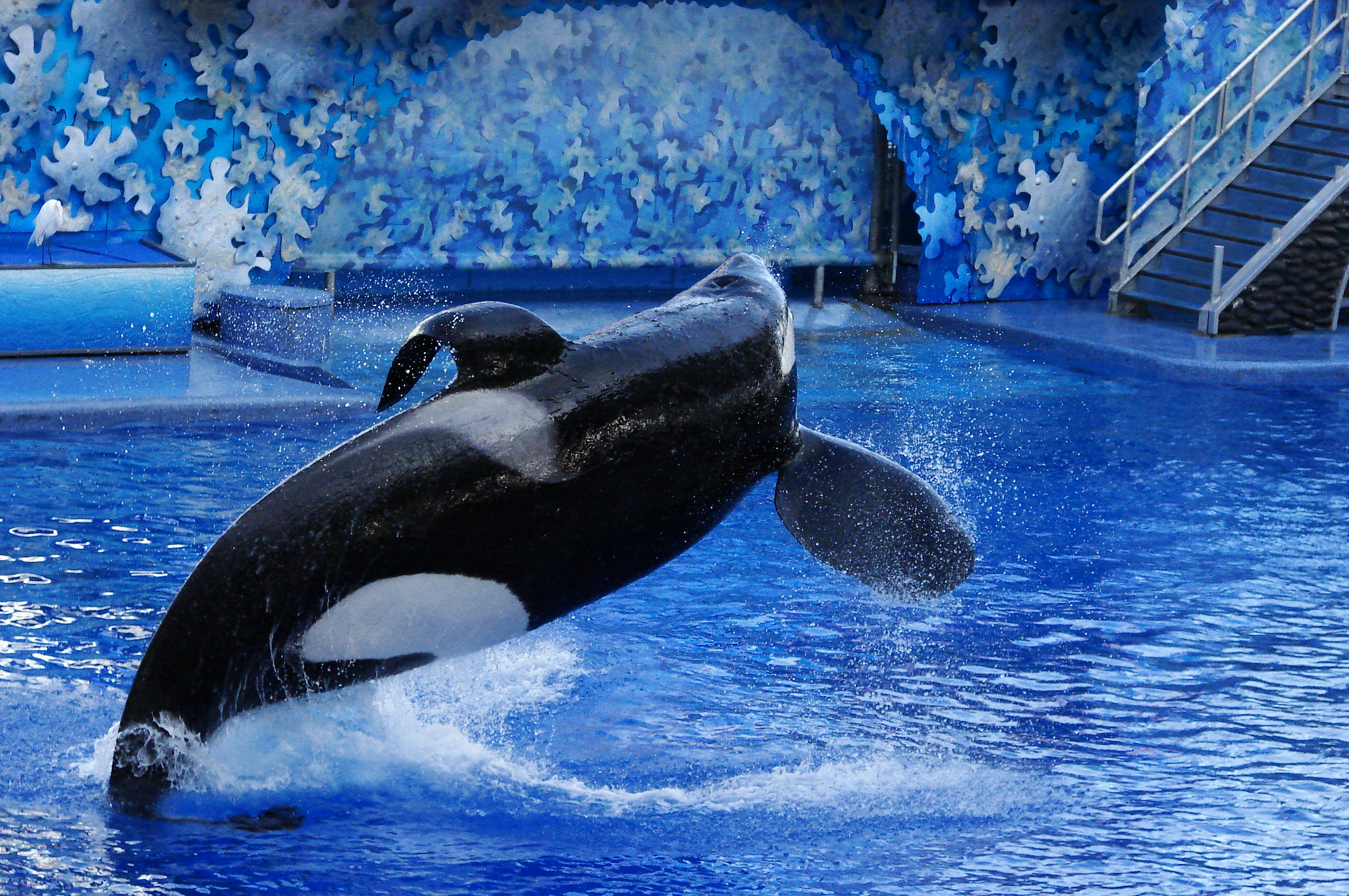 It's time for a change - SeaWorld