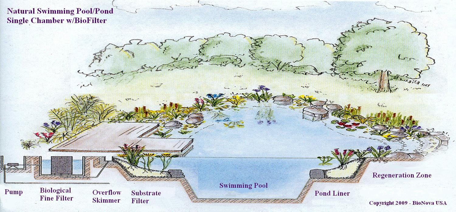 Eau Naturel: Why You Should Consider A Natural Swimming Pool
