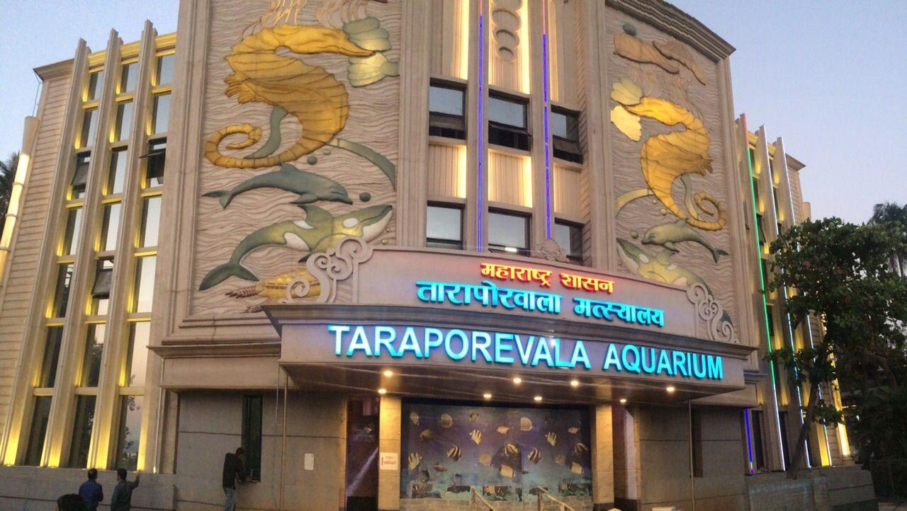 Image result for Taraporewala Aquarium hd pics