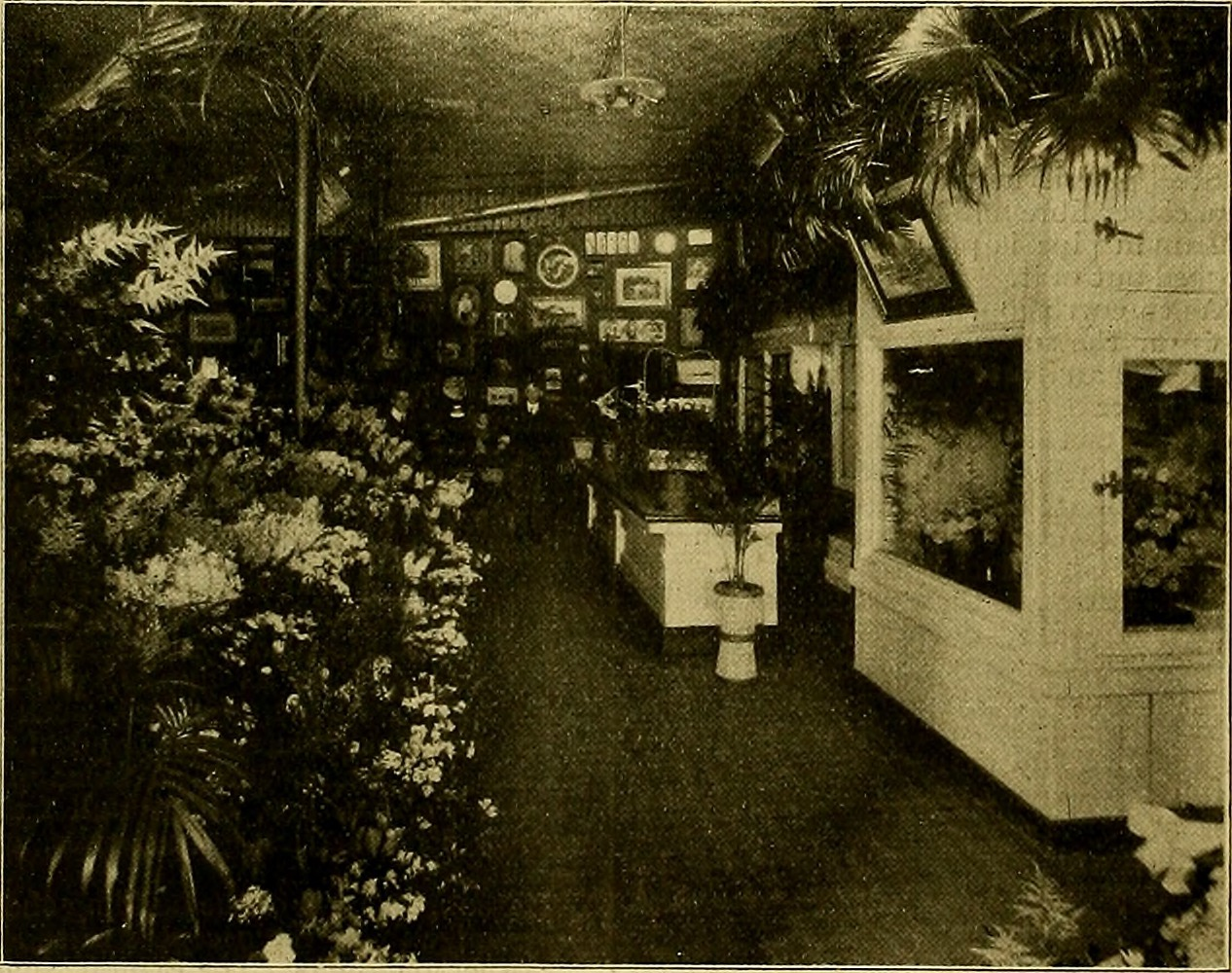 File:The American florist - a weekly journal for the trade (1903) (17951293410).jpg