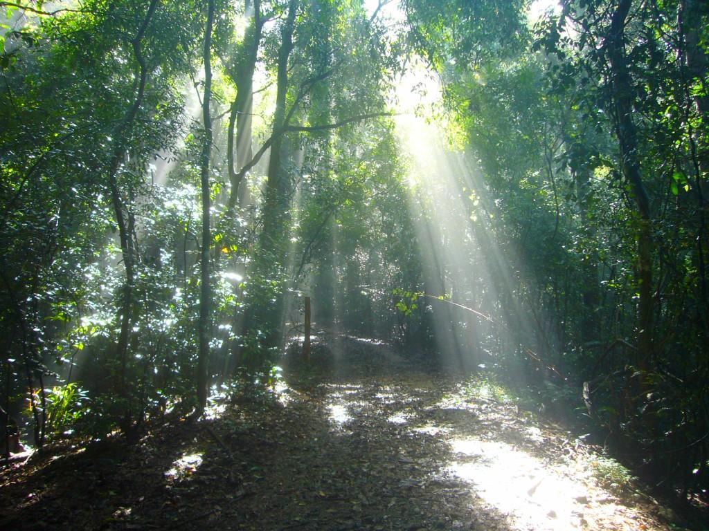 File Udawattakele Forest Scene Wikimedia Commons