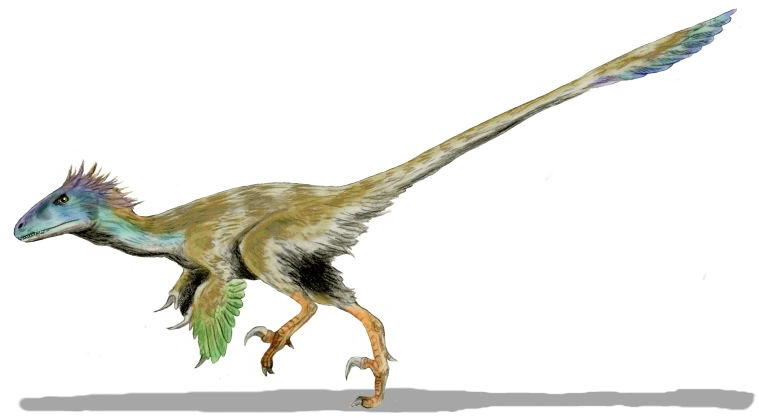 http://upload.wikimedia.org/wikipedia/commons/7/7c/Utahraptor_BW.jpg