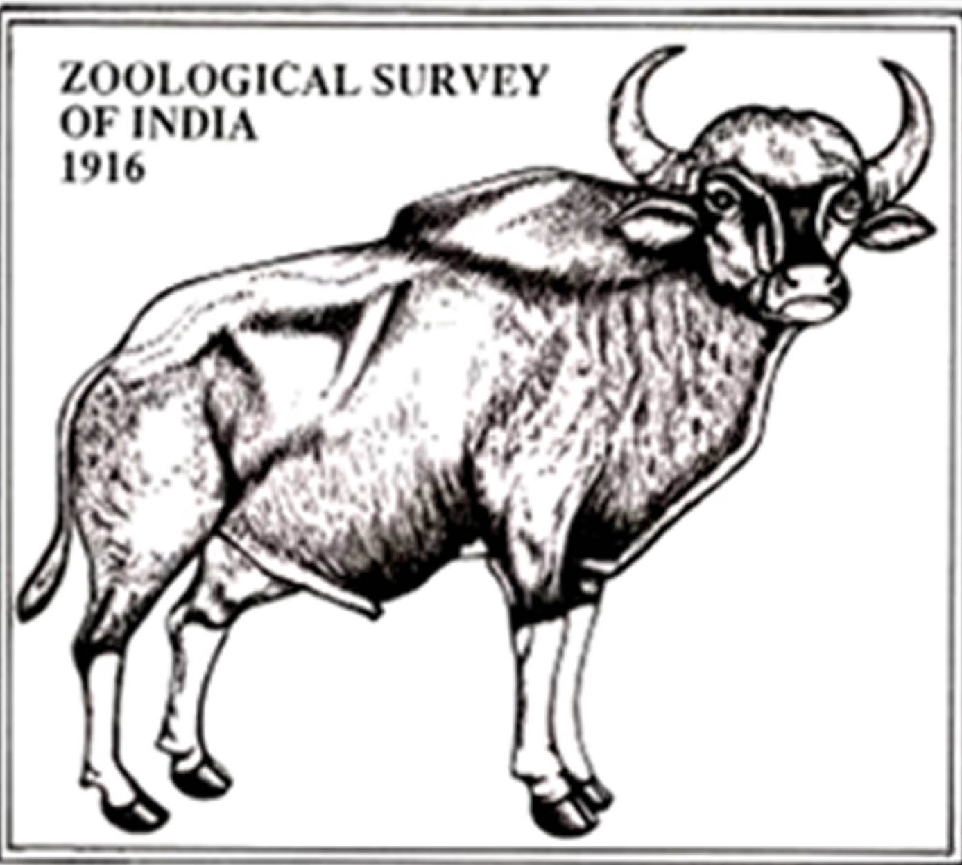 ZSI releases first compendium of animal species in Indian Sundarbans
