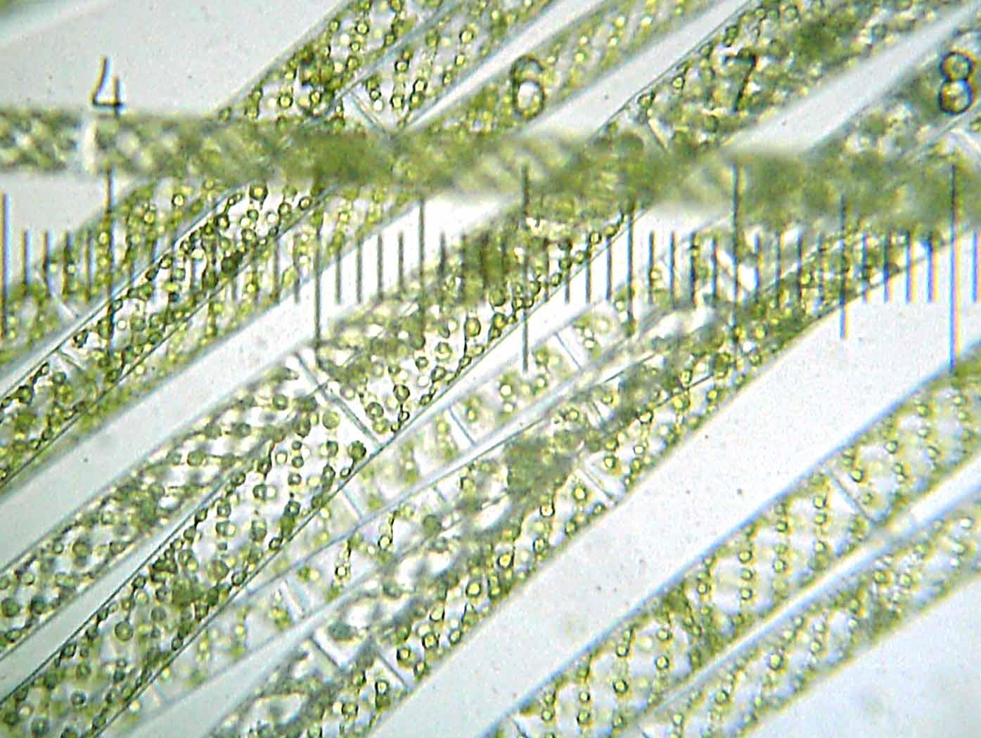 Marine Cyanobacteria A Proli C Source Of Natural Products
