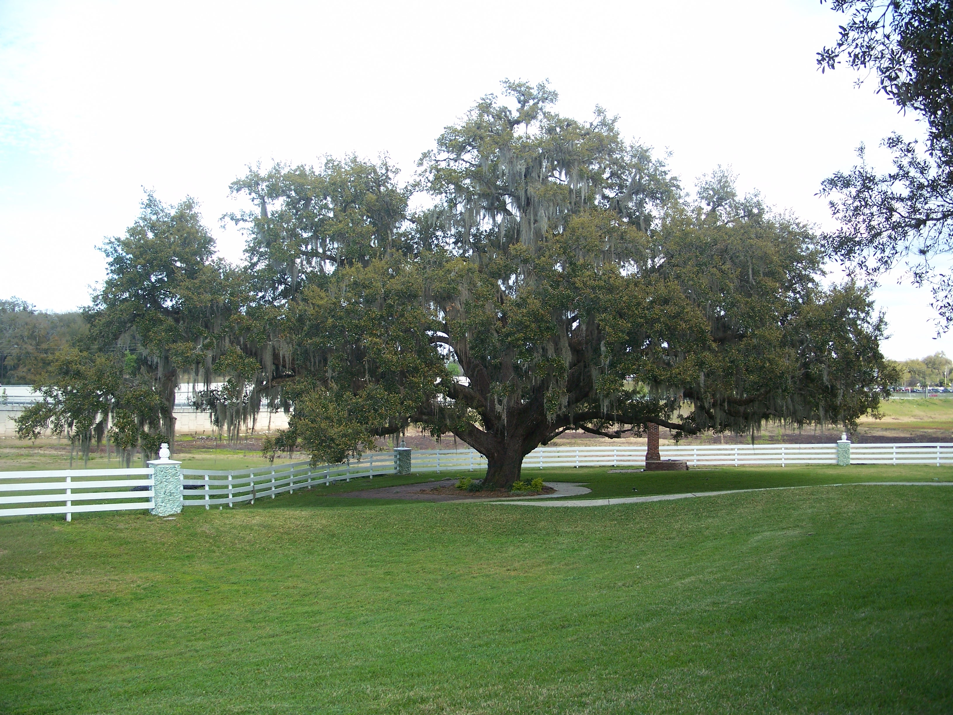 Plantation oaks titusville fl dating