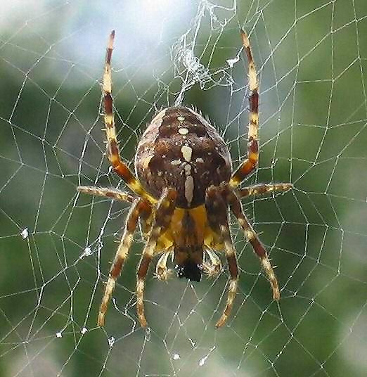 информация и картинки о пауках отснятый материал вышлют