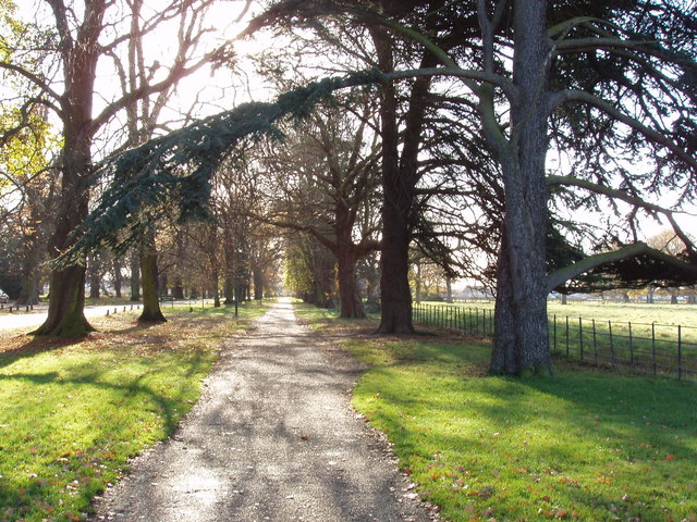 Avenue from Osterley House to Osterley Station - geograph.org.uk - 621367