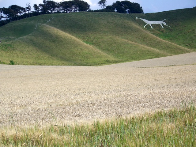 Barley crop, Cherhill - geograph.org.uk - 1462064