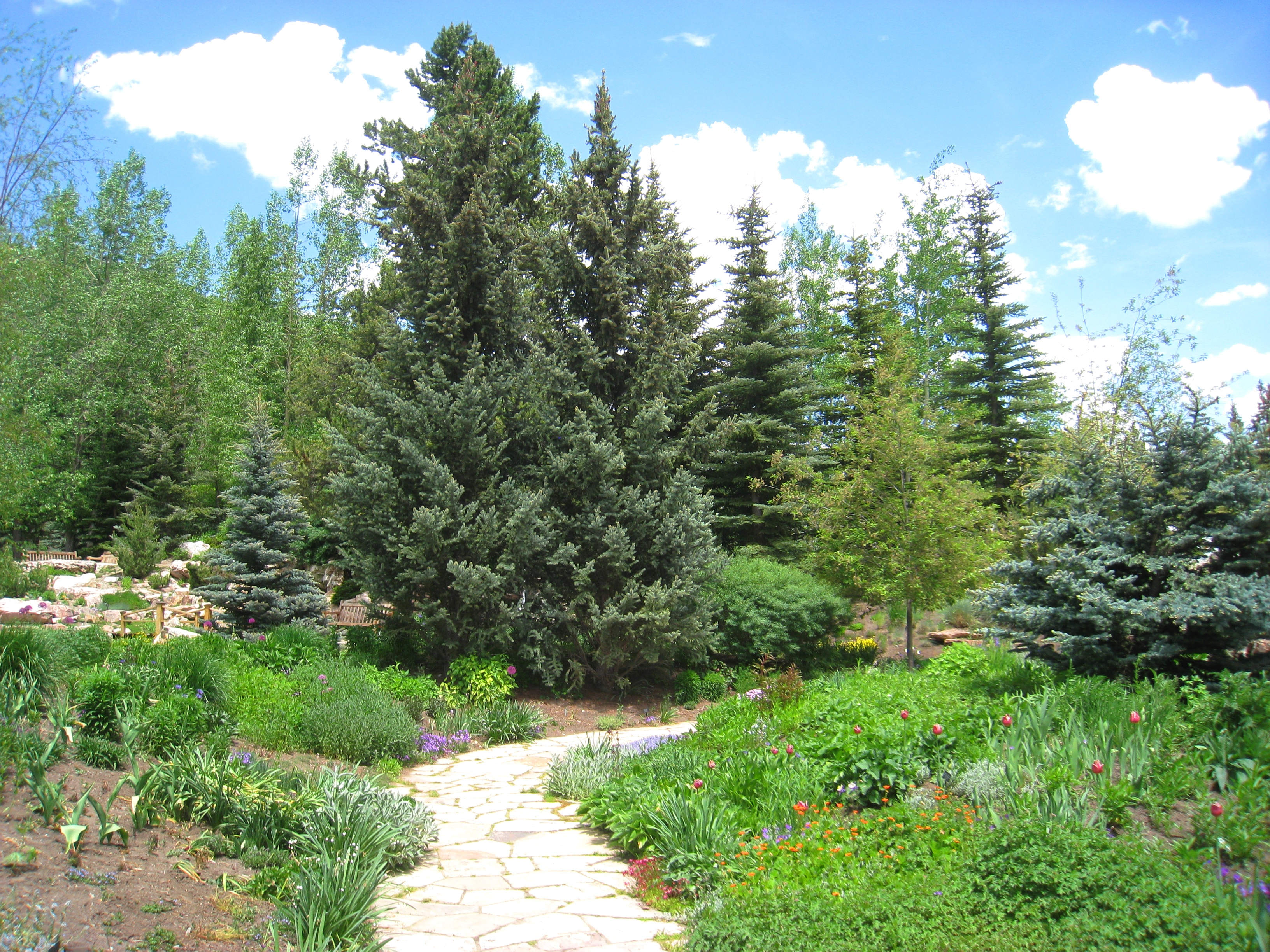 File:Betty Ford Alpine Gardens, Vail, CO   Trail