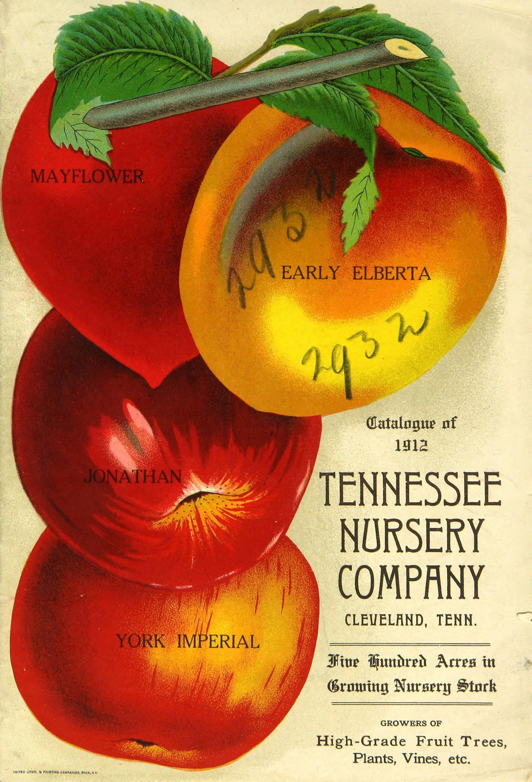 File Boatman S Tennessee Nursery And Seed Co Materials Bhl47795202 Jpg