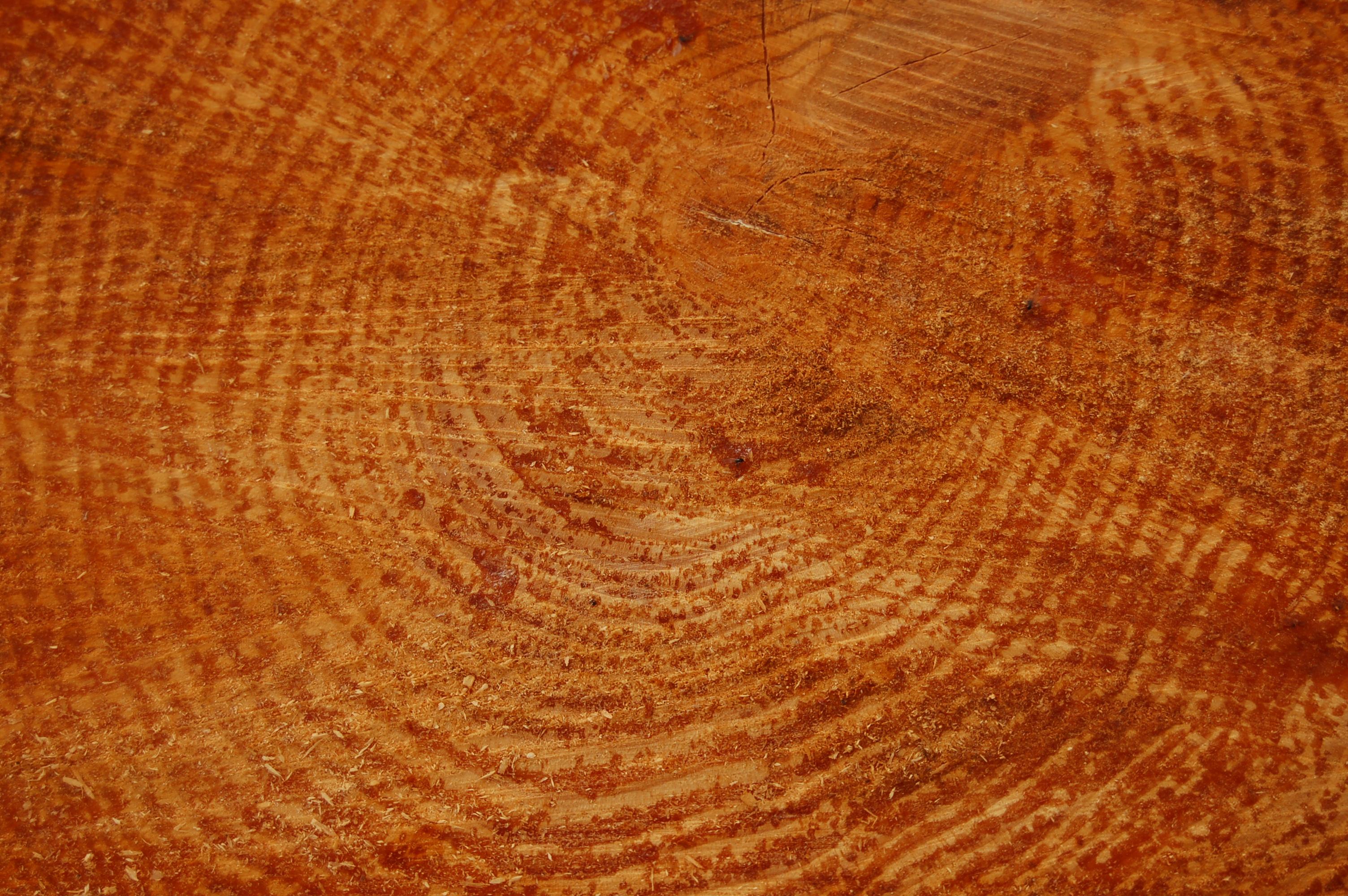 Le Fibre Del Legno legno - wikipedia