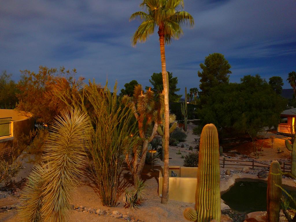 carisoprodol arizona maricopa