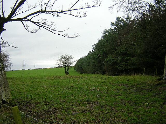 File:Conifer Plantation Near Dickland - geograph.org.uk - 283806.jpg