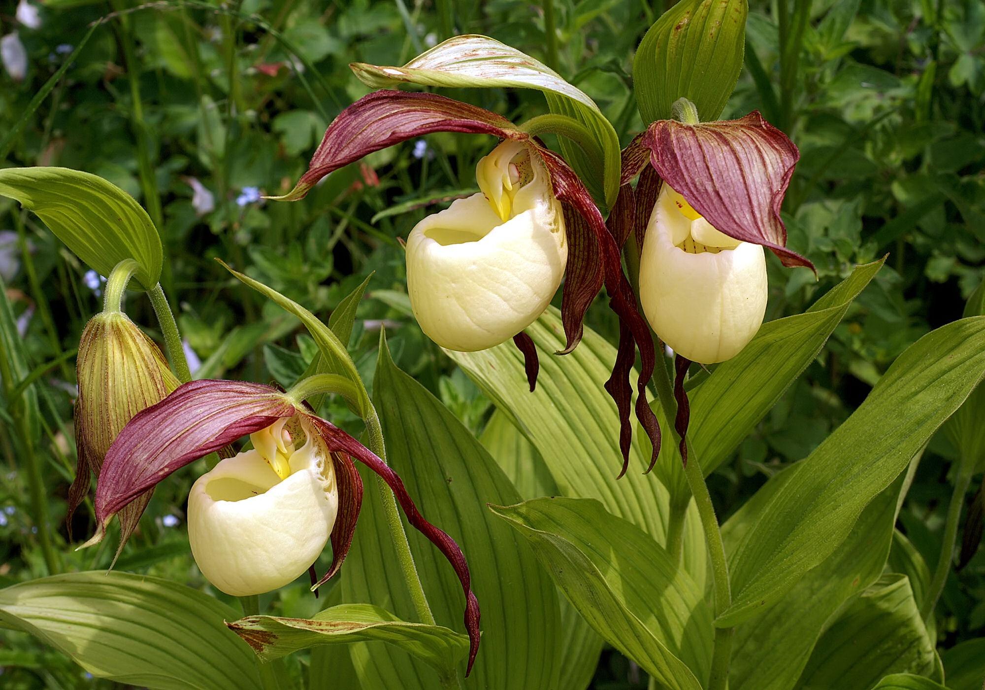 Редкие цветы фото и каталог