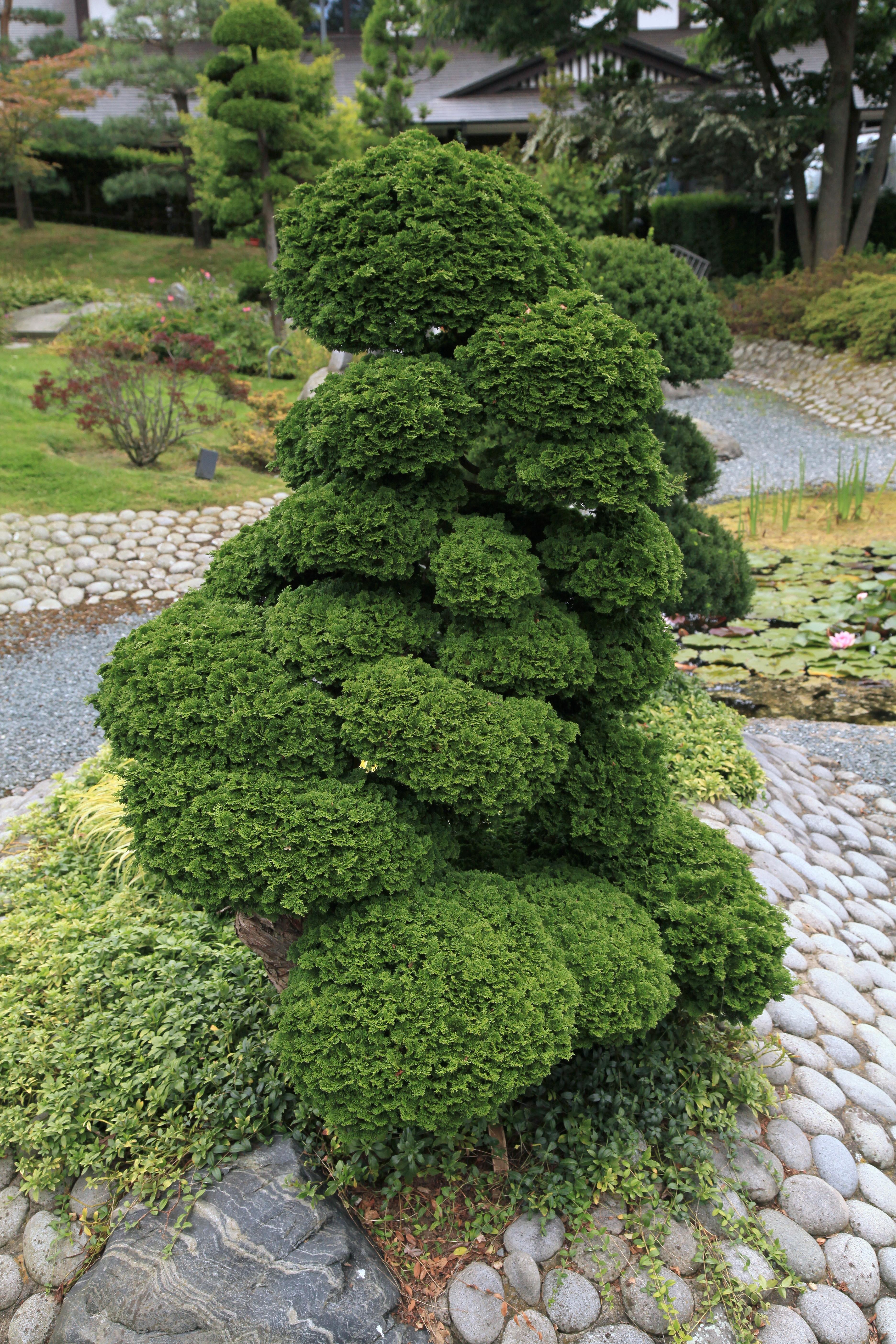 Filedüsseldorf Brüggener Weg Eko Haus Japanischer Garten 20