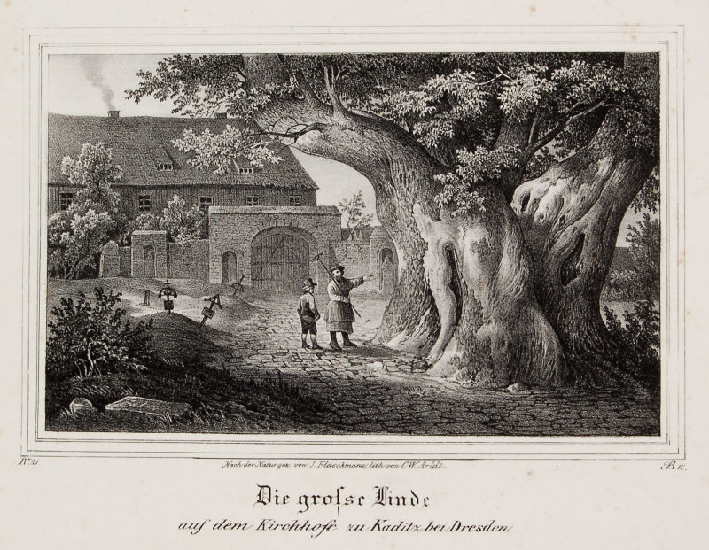 http://upload.wikimedia.org/wikipedia/commons/7/7d/Die_gro%C3%9Fe_Linde_auf_dem_Kirchhofe_zu_Kaditz_bei_Dresden.jpg