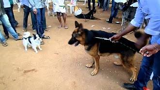 Dogs of nellore.jpg