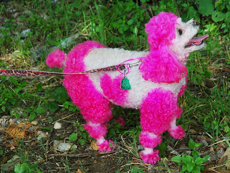 Pink Puppy Dog Collars