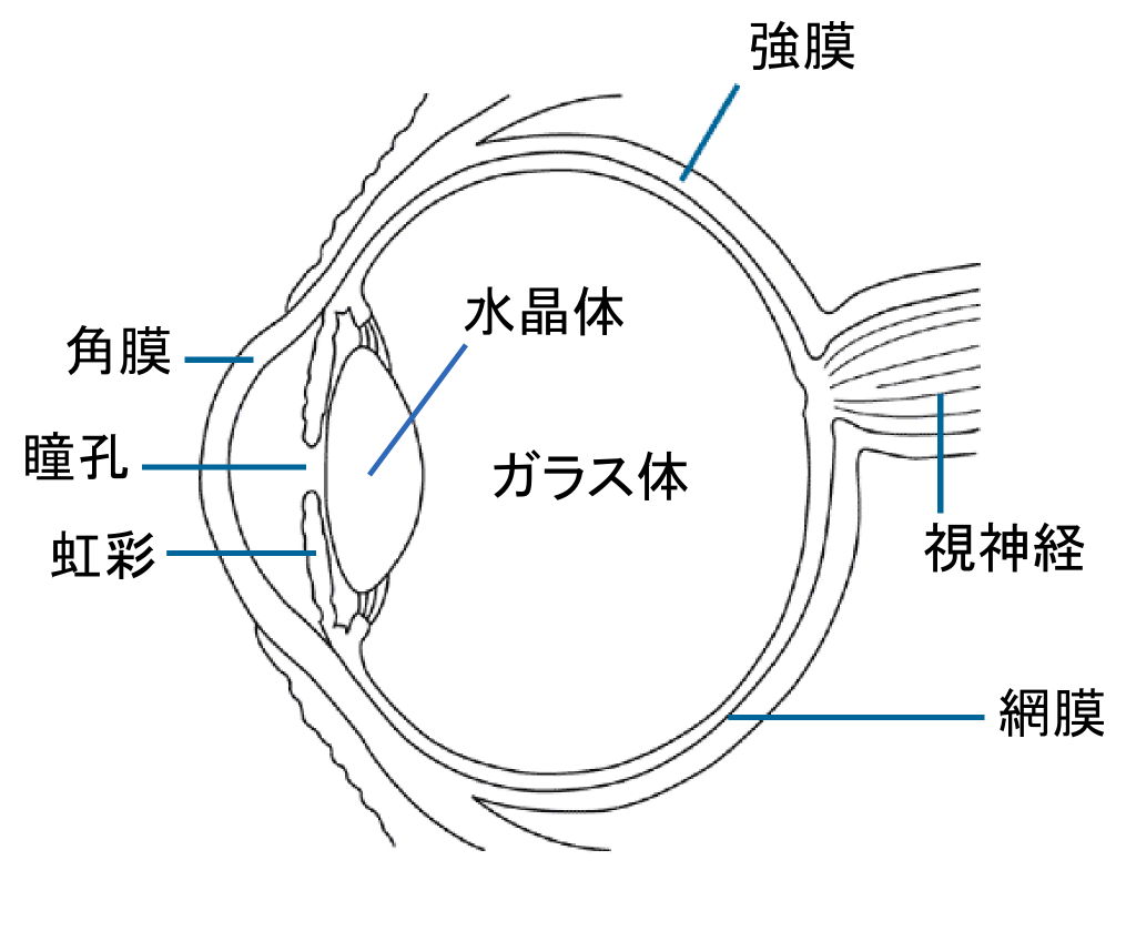 file:eye diagram (ja) - wikimedia commons