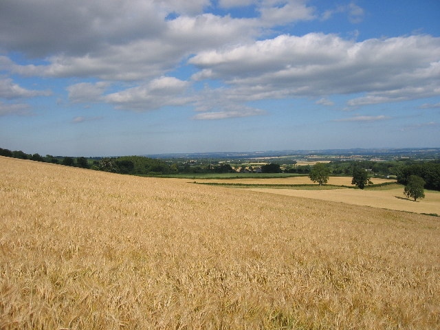 Field below Wapley Hill on the Mortimer Trail - geograph.org.uk - 70680