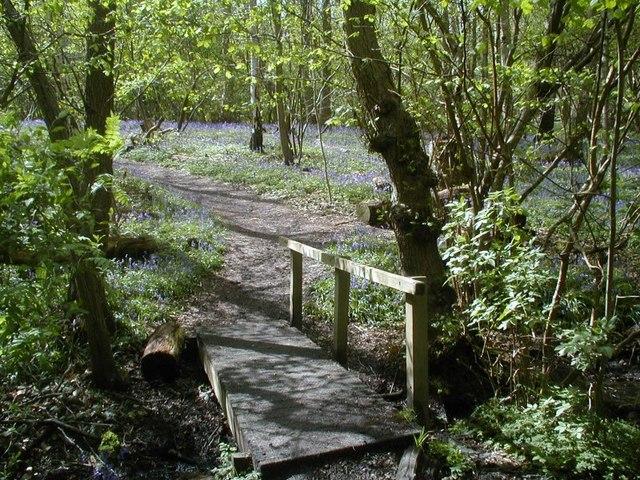 Footbridge over stream in Blakes Wood - geograph.org.uk - 314770