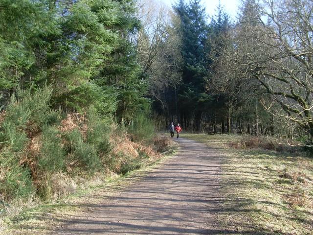 Forest path, Balmaha - geograph.org.uk - 1727022