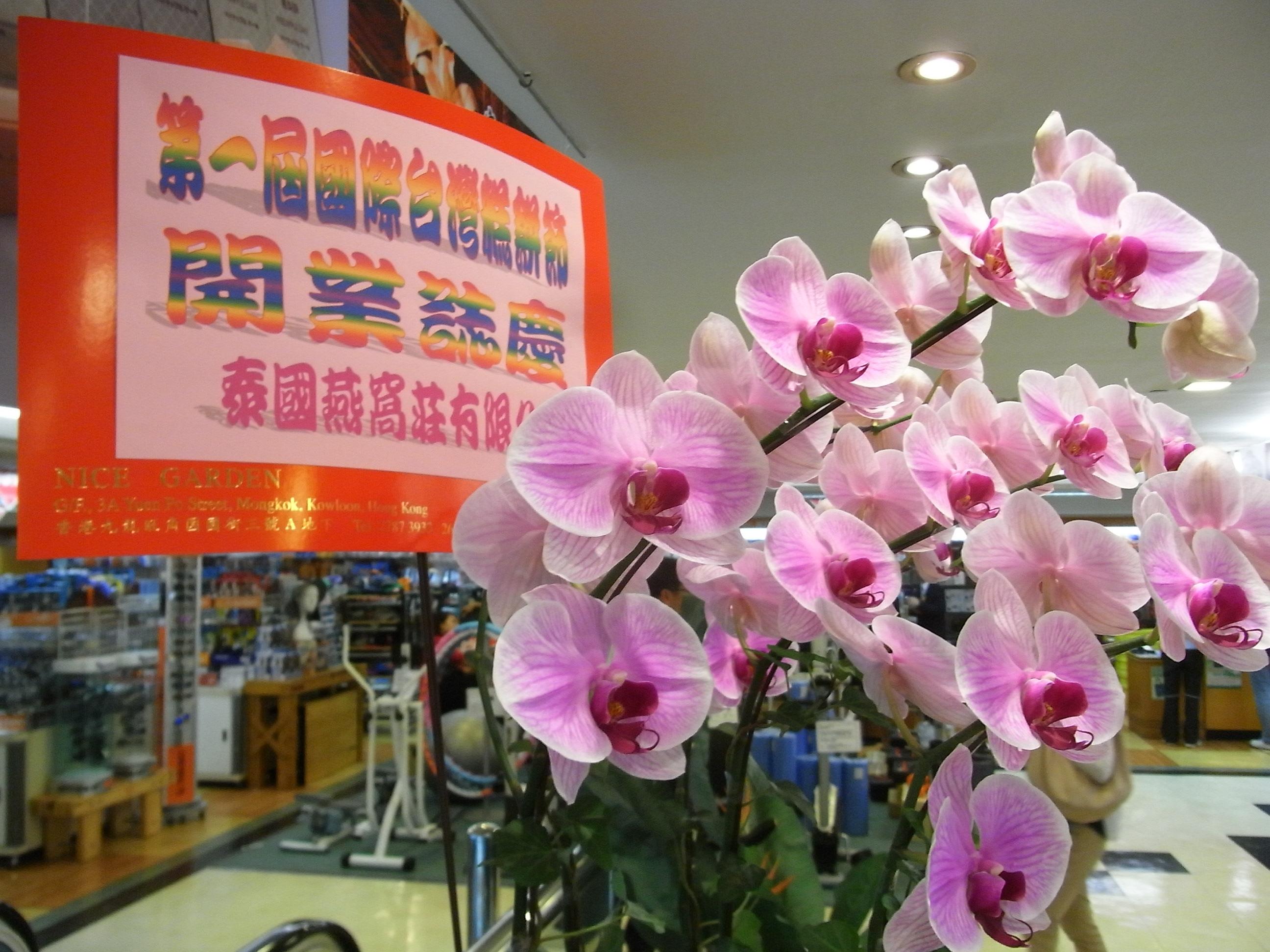 Filehk jordan yhcpe yue hwa chinese products emporium 1st pastry filehk jordan yhcpe yue hwa chinese products emporium 1st pastry fectival taiwan pink flowers mightylinksfo